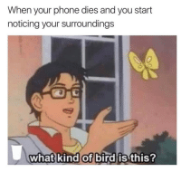 "<p>Making the most of it when your phone dies.. via /r/wholesomememes <a href=""http://ift.tt/2xRcYWR"">http://ift.tt/2xRcYWR</a></p>: When your phone dies and you start  noticing your surroundings  what kind of bird is this? <p>Making the most of it when your phone dies.. via /r/wholesomememes <a href=""http://ift.tt/2xRcYWR"">http://ift.tt/2xRcYWR</a></p>"
