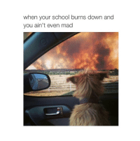 Lmao, School, and Girl Memes: when your school burns down and  you ain't even mad me lmao