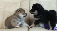 "Memes, 🤖, and Fluffy: When your sibling screams ""I didn't touch you!"" but keeps fighting. Tap🔊 Follow @9gag App📲👉@9gagmobile 👈 9gag (📹247kani 