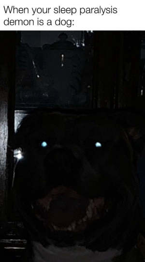 Pitbulls are actually noice if you say other wise you're a lier or a cat: When your sleep paralysis  demon is a dog: Pitbulls are actually noice if you say other wise you're a lier or a cat