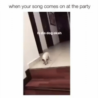 Funny, Lmao, and Party: when your song comes on at the party  dog okah Ayee turn up lmao