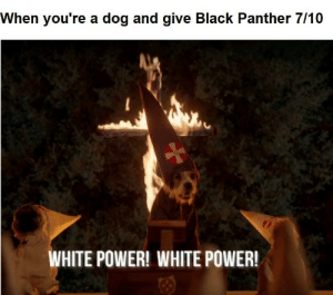 RACIST DOG by dullfool68 FOLLOW 4 MORE MEMES.: When you're a dog and give Black Panther 7/10  WHITE POWER! WHITE POWER! RACIST DOG by dullfool68 FOLLOW 4 MORE MEMES.