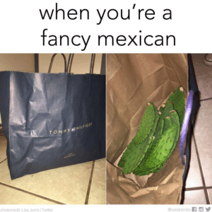 Twitter, Fancy, and Mexican: when you're a  fancy mexican  MY HILFIGER  photocredit: Lisa buns /Twitter  @wearemitu f Oh you fancy? Pinche naca