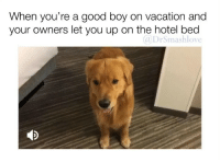 "Be Like, Bless Up, and Chill: When you're a good boy on vacation and  your owners let you up on the hotel bed  @DrSmashlove (Sound on 🔊) My reaction when I meet a girl at a bar and she take me back to her crib afterward and her room surprisingly actually tidy and the bed is made and there isn't laundry everywhere 🙂🙂🙂🙂🙂🙂🙂🙂🙂🙂😂 ""wowwwwww smash with the FOULNESS today FIRST of all SOME LADIES WORK. A JOB. WE LEAVE QUICKLY AND CANT MAKE THE BED. WE GOTTA APPLY MAKE UP. WE GOTTA DO HAIR. WE GOTTA LOOK PRESENTABLE. U AINT GOT THAT STRESS. HALF THE MEN I WORK WITH DONT EVEN BATHE IN THE AM WITCHOE PERSNICKETY DEMANDING A$$ IF 👏 U 👏 SO 👏 DEMANDING 👏 THEN 👏 MAKE 👏 MY 👏 BED 👏 THEN 👏 LAY 👏 IN 👏 IT 👏 D!CKFACE 👏. LOOKIN A$$ 😤."" Yep. Like I said baby. Make ya bed ""IT TAKE ONLY THREE MINUTE"" *my haunting mama's voice* BLESS UP 😍😂😂 [Editor's Note: shout to u ladies who be like ""WELL. I really want you to come up 😌. But my place is a mess LOL!"" Me: *shannon sharpe voice* ""THAT AIN NO PRAHBLEM! That ain't no problem 😊."" Girl: ""LOL OKAYYYY NO JUDGING THO! Lolol!"" Me: *judges vigorously in secret* 🤗😂. Second editor's note: ""wowwwww smash is a h0e and not only that a judgmental h0e where did this come from? He was fake woke?!! Guess he's just another worthless man now."" Me: y'all really need to chill and let me off the leash occasionally all my sisters is brilliant and they all got careers and guess what, busy women ain't trying to impress no cot damn man sometimes u gotta do a catch-up clean on the wknd LET ME TEASE YALL SOMETIMES I AM STILL AN ALLY LMAO SOMETIMES I JUST GOT JOKES ALSO THE h0e LABEL REALLY DO BE HURTING MY FEELINGS I PREFER 'sensually exploratory by disposition' (SEBD) THAT MAKE ME FEEL A LIL BETTER BLESS BLESS 👏 UP 👏😂😂😂]"