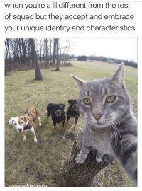 Memes, 🤖, and Identity: when you're a lil different from the rest  of squad but they accept and embrace  your unique identity and characteristics  iterolcs  Source 💕