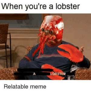 Meme, Reddit, and Relatable: When you're a lobster  esheepcat  exe  LOBSTER  A  Relatable meme yay, national lobster day