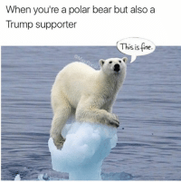 """Funny, Gucci, and Bear: When you're a polar bear but also a  Trump supporter  This is fine """"This ice is solid, like totally not melting. We gucci"""" (before you comment an angry paragraph, just remember that I don't care. I just poke fun at current events and what's trending. It's not that deep)"""