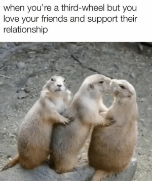 https://t.co/GSYBLm6Xwb: when you're a third-wheel but you  love your friends and support their  relationship https://t.co/GSYBLm6Xwb