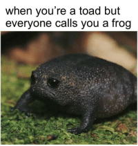 Toad, Frog, and You: when you're a toad but  everyone calls you a frog