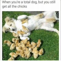 Dank, All The, and 🤖: When you're a total dog, but you still  get all the chicks