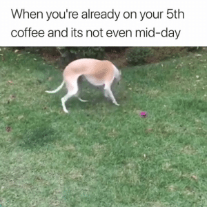 Me right now 😂: When you're already on your 5th  coffee and its not even mid-day Me right now 😂