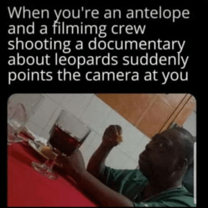 Well… this won't end well.: When you're an antelope  and a filmimg crew  shooting a documentary  about leopards suddenly  points the camera at you Well… this won't end well.