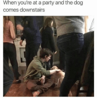 Memes, Party, and 🤖: When you're at a party and the dog  comes downstairs Finally somebody I could vibe with.