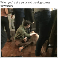You Found the most real buddy in the party .: When you're at a party and the dog comes  downstairs You Found the most real buddy in the party .