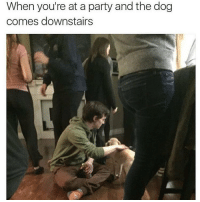 Antisocial social club @mybestiesays: When you're at a party and the dog  comes downstairs Antisocial social club @mybestiesays
