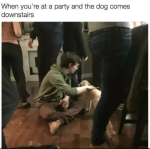 Downstairs: When you're at a party and the dog comes  downstairs