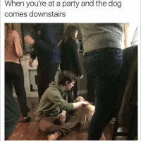 Girl Memes, The Dog, and Come-Downstairs: When you're at a party and the dog  comes downstairs Now it's a party