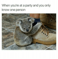 Memes, 🤖, and Account: When you're at a party and you only  know one person *smiles awkwardly (rp @cutestcritters 👈 great new animal meme account, follow follow follow!)
