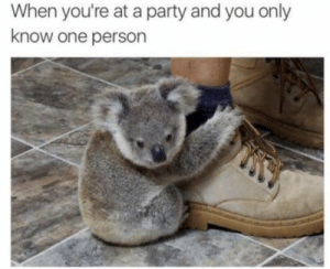 me irl by Nordic_Wolf_1488 FOLLOW 4 MORE MEMES.: When you're at a party and you only  know one person me irl by Nordic_Wolf_1488 FOLLOW 4 MORE MEMES.