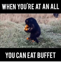 WHEN YOURE AT AN ALL  YOU CAN EAT BUFFET