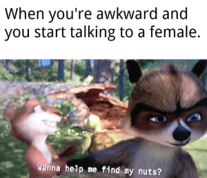 Meirl: When you're awkward and  you start talking to a female.  C  Wanna help me find my nuts? Meirl
