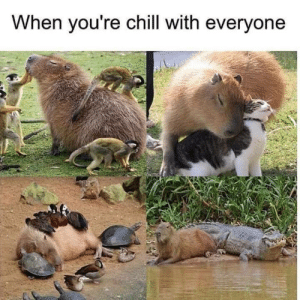 Chill, Never, and Capybara: When you're chill with everyone This capybara is what most people could never be