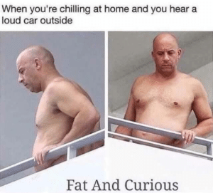 Fat And Curious: When you're chilling at home and you hear a  loud car outside  Fat And Curious Fat And Curious