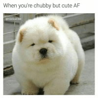 chubby: When you're chubby but cute AF  @hilarious ted