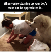 Dank, Dogs, and Sorry: When you're cleaning up your dog's  mess and he appreciates it.. I'm sorry, I'll try to make it outside next time.