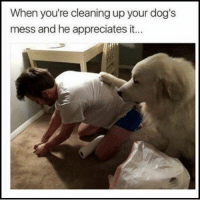 Animals, Cute, and Dogs: When you're cleaning up your dog's  mess and he appreciates it Dogs, those lovable little sh*ts! #DogMemes #Dogs #Animals #Cute #Adorable