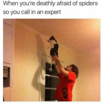 Spiders, You, and Call: When you're deathly afraid of spiders  so you call in an expert