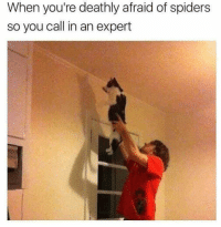 Afraid Of Spiders: When you're deathly afraid of spiders  so you call in an expert