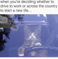 Drive To Work