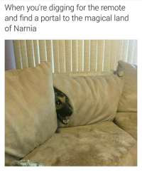 Memes, Magic, and Portal: When you're digging for the remote  and find a portal to the magical land  of Narnia  Chaos reigns Mr. Tumnus, is that you? @chaos.reigns_ 👈 follow for more