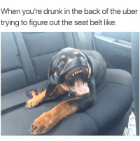 I think something's wrong with your Kia Sorento Christopher😳 girlsthinkimfunnytwitter wednesdayvibe drunkintheuber: When you're drunk in the back of the uber  trying to figure out the seat belt like: I think something's wrong with your Kia Sorento Christopher😳 girlsthinkimfunnytwitter wednesdayvibe drunkintheuber