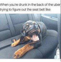 This is me and @_taxo_ every ThirstyThursday 😎😂🍻 Tag a friend 👭👬 and go follow @_taxo_ @_taxo_ @_taxo_ 🙌🤓: When you're drunk in the back of the uber  trying to figure out the seat belt like: This is me and @_taxo_ every ThirstyThursday 😎😂🍻 Tag a friend 👭👬 and go follow @_taxo_ @_taxo_ @_taxo_ 🙌🤓
