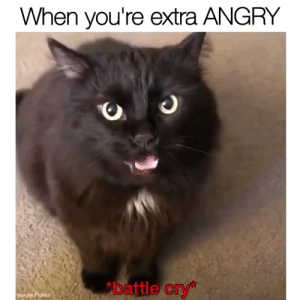 """Test, Angry, and T Test: When you're extra ANGRY  battle cry""""  oumage Pranks Dont test me hooman"""