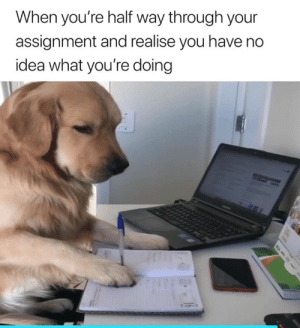 Idea, You, and What: When you're half way through your  assignment and realise you have no  idea what you're doing