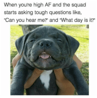 "Memes, High AF, and 🤖: When you're high AF and the squad  starts asking tough questions like,  ""Can you hear me?"" and 'What day is it?""  @high fiveexpert Bruuuh..... What's with all the ruff questions?? 😑 (Rp @highfiveexpert relax your mind and follow the @highfiveexpert)"