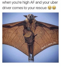 Af, Click, and Journey: when you're high AF and your uber  driver comes to your rescue  sayin no 😂😂😂😂 Save yourself a £15 journey by signing up to uber using my code *WotUSayinTho* 👈🏿 - GET HOME FOR FREE ON ME! 😎 READINFO 👇🏿 1. DOWNLOAD THE UBER APP FROM THE STORE 2. CREATE AN ACCOUNT WITH UBER 3. ENTER PROMO CODE *WotUSayinTho* 4. ENJOY YOUR £15 FREE UBER RIDE! PROVIDING A WORLDWIDE SERVICE 🌍🌍 🚕🚕🚕🚕🚕🚕🚕🚕🚕🚕🚕🚕 PROMOCODE: *WotUSayinTho* (CLICK THE LINK IN MY BIO TO GET STARTED) - ➡️MAKE SURE YOU USE YOUR CODE BEFORE EXPIRATION DATE ⬅️😎 - UK London Birmingham Liverpool Carnival Leeds Southampton Portsmouth Uber Belfast Bristol Dublin Nottinghill NottinghillCarnival Leicester Nottingham Manchester Merseyside Newcastle Cab FreeRide Weekend UK 2016 Summer UberCodes UberEverywhere