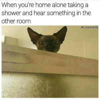 Memes, 🤖, and Cosmos: When you're home alone taking a  shower and hear something inthe  other room  cosmos 🐱🚿I have a loofah and I know how to use it (rp the funny @cosmoskyle @cosmoskyle )