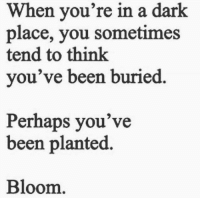 "<p>Perhaps you&rsquo;ve been planted via /r/wholesomememes <a href=""http://ift.tt/2I7IgOk"">http://ift.tt/2I7IgOk</a></p>: When you're in a dark  place, you sometimes  tend to think  you've been buried  Perhaps you've  been planted.  Bloom <p>Perhaps you&rsquo;ve been planted via /r/wholesomememes <a href=""http://ift.tt/2I7IgOk"">http://ift.tt/2I7IgOk</a></p>"