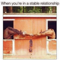 Dank, 🤖, and Relationship: When you're in a stable relationship Neigh I say.