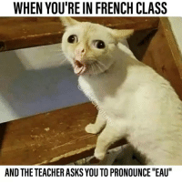 "Memes, Teacher, and French: WHEN YOU'RE IN FRENCH CLASS  AND THE TEACHER ASKS YOU TO PRONOUNCE ""EAU"""