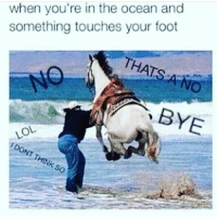 Memes, TV Shows, and Ocean: when you're in the ocean and  something touches your foot  THATS  OL TRUE 😂 ♥ 🌿| QOTP : favorite TV show? 💕 ♥ Want me to post one of your memes? Just use the hashtag -kawaiimemez 😚 ♥ 🌷| Tags : meme memes clean cleanmeme cleanmemes lol lolol ha haha omg dying crying laughing laugh laughoutloud goofy hilarious wow kawaii kawaiimemeteam relatable joke jokes kawaiimeme