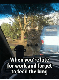 9gag, Cats, and Cute: When you're late  for work and forget  to feed the king Then you realize there is no fury greater than a hungry cat's fury. https://9gag.com/gag/a8yO0WO/sc/cute?ref=fbsc