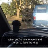 Stop right here hooman (@hilarious.ted): When you're late for work and  forget to feed the king Stop right here hooman (@hilarious.ted)