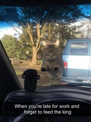 Memes, Work, and 🤖: When you're late for work and  forget to feed the king