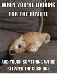 Funny, Memes, and Weird: WHEN YOU'RE LOOKING  FOR THE REMOTE  AND TOUCH SOMETHING WEIRD  BETWEEN THE CUSHIONS Top 60 Funny Memes And Hilarious Sayings 25