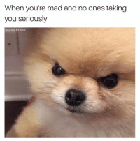 Angry poof lol  Like Ownage Pranks for MORE funny pics!: When you're mad and no ones taking  you seriously  ou mage Pranks Angry poof lol  Like Ownage Pranks for MORE funny pics!